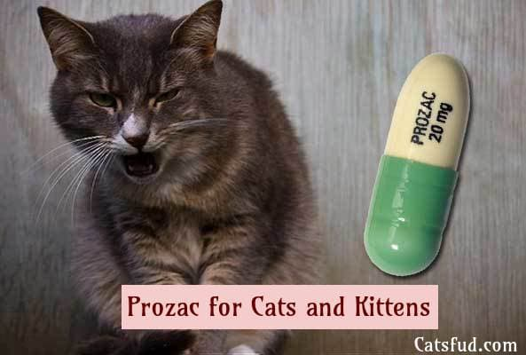 Prozac for Cats