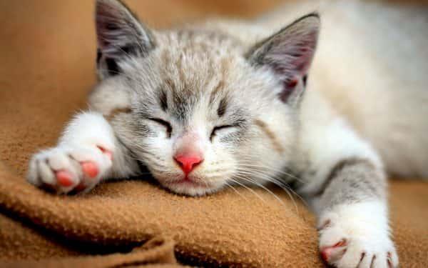 best flea medicine for cats