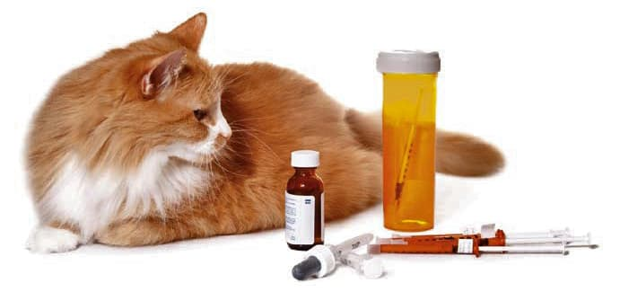 cat diabetes symptoms