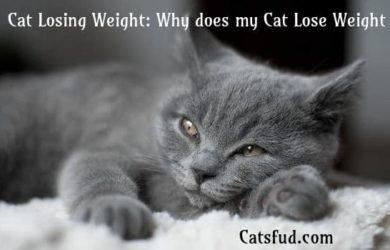 cat losing weight