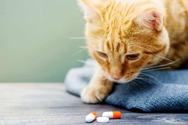 cat probiotics