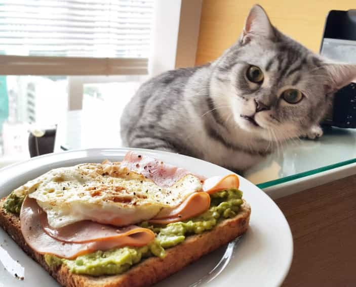 commercial cat food for kidney disease