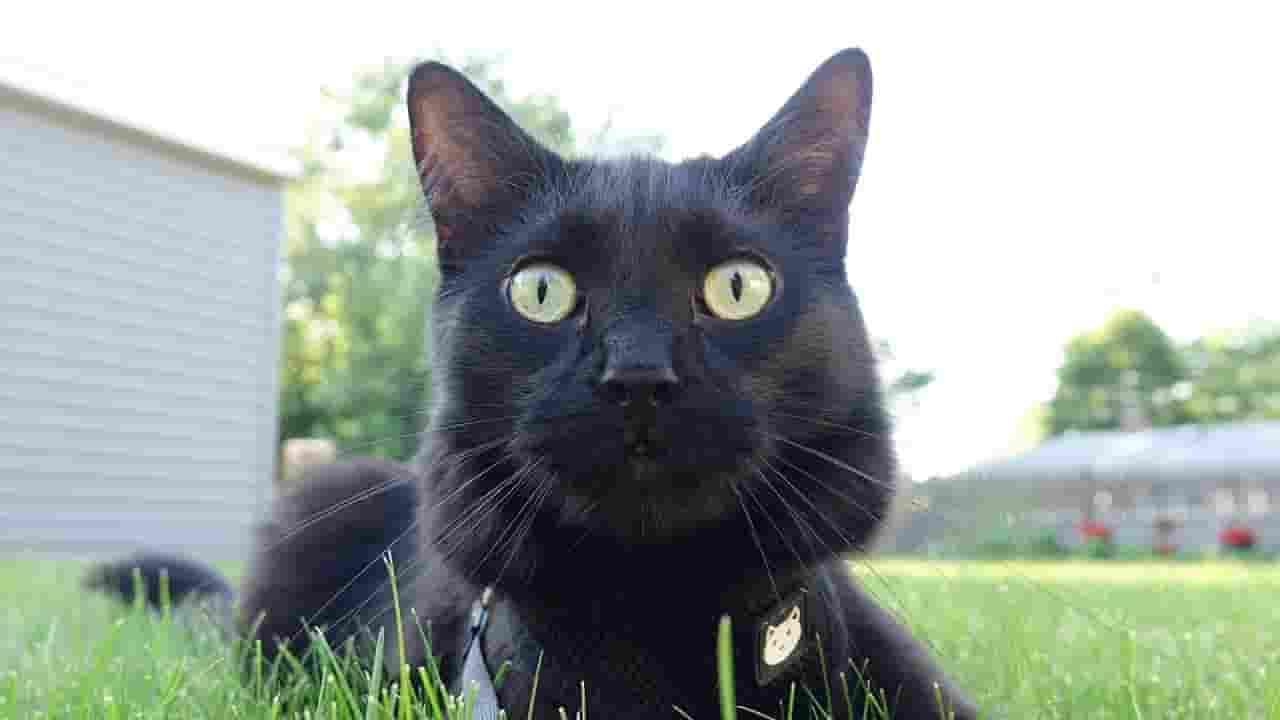 cute black cat
