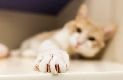 cutting cat nails