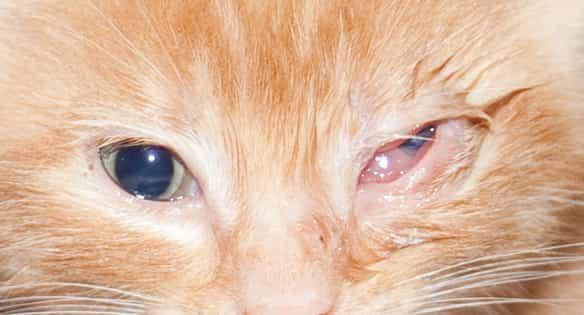 eye infection symptoms