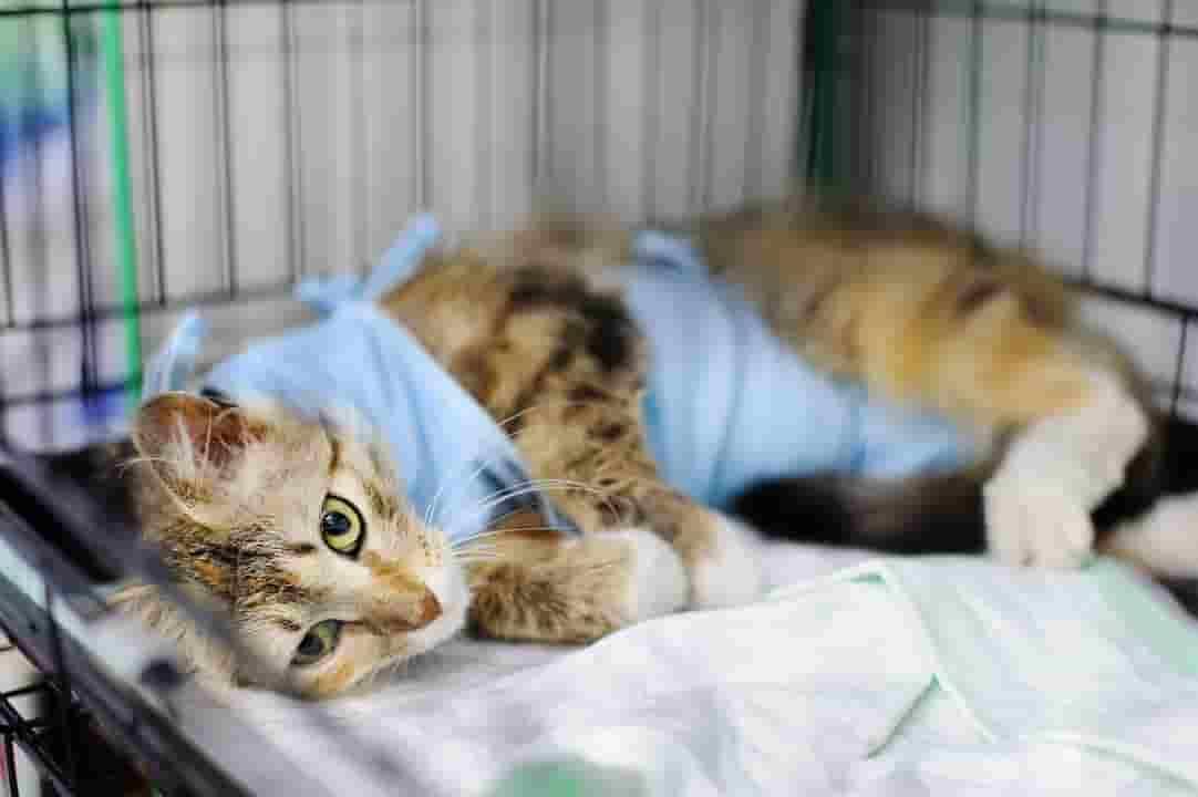 feline leukemia vaccine