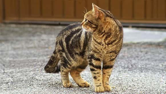 girl cat names calico