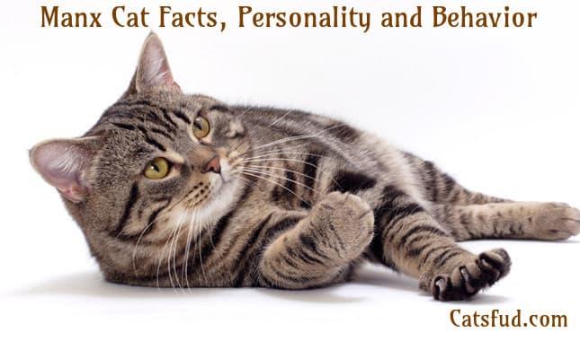 Manx Cat – History's Greatest  |Manx Cat History