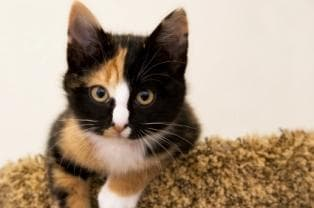 names for calico cats