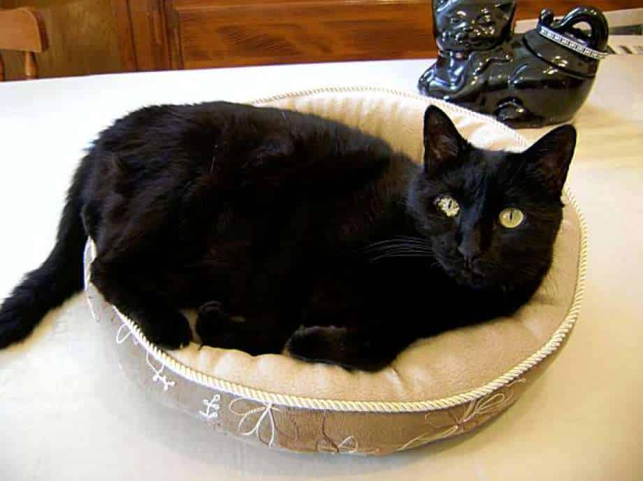 signs of kidney failure in cats