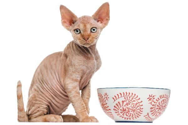 sphynx cat hypoallergenic cats