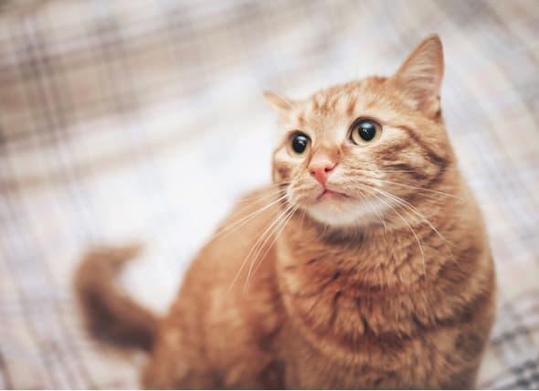 Avoid Hair Loss in Cats