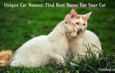 Unique Cat Names