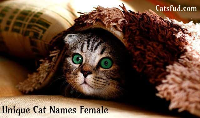 Unique Cat Names Female