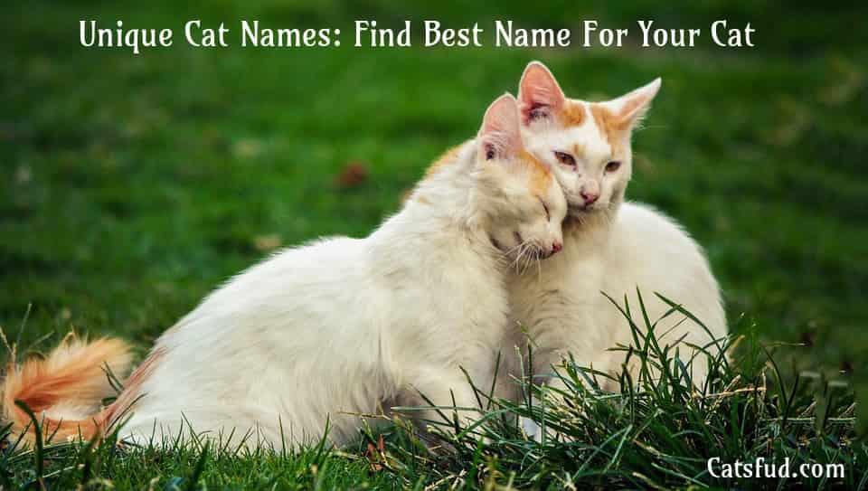 Unique Cat Names Find Best Name For Your Cat - Catsfud