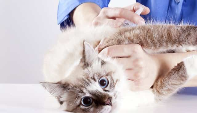 antibiotics for cats dosage
