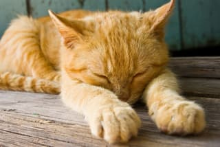 cat antibiotics side effects