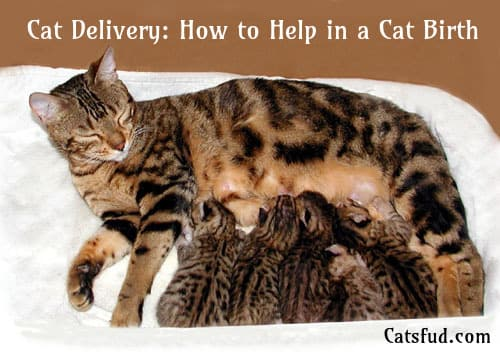 cat delivery