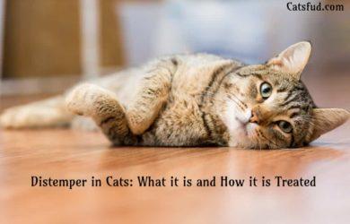 distemper in cats