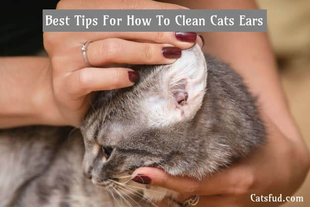 how to clean cat ears