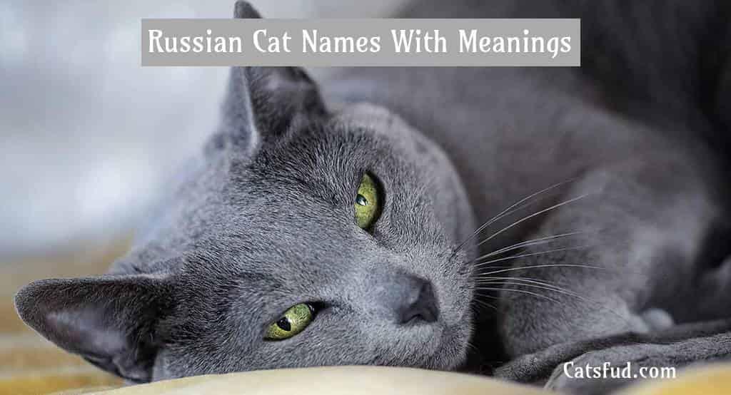 russian catnames