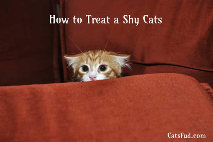shy cats
