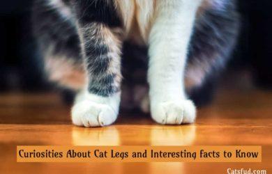 cat legs