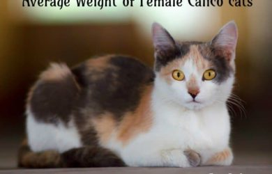 female calico