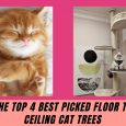 Floor To Ceiling Cat Trees